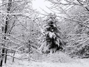 Winter_scenes_1