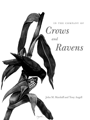 Company of crows and ravens